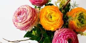 رنگ گل ها و معانی پشت شان